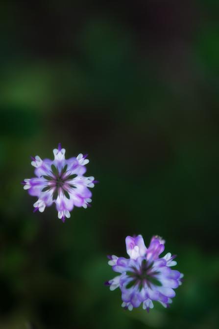 DSC04559-Edit-1-4.jpg